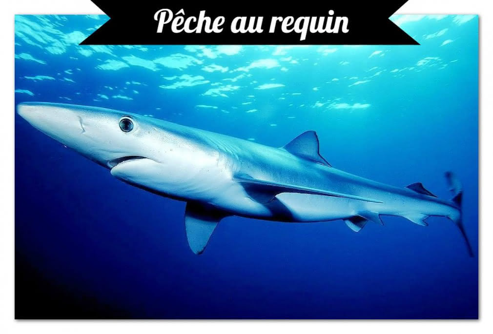 Pêche Arcachon3