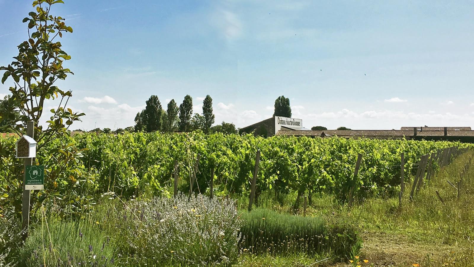 Chateau-Hourtin-Ducasse1-2