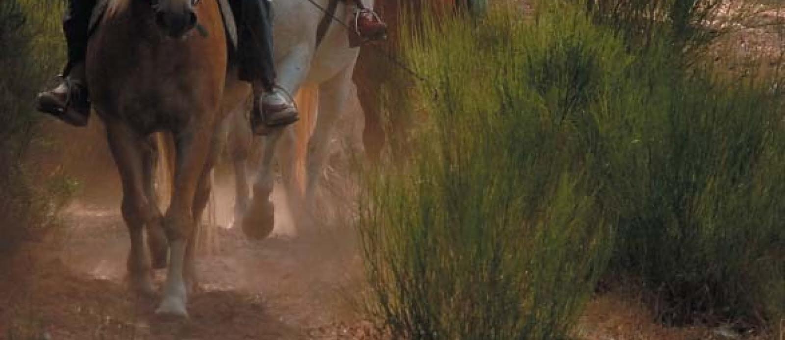 Equitation plaisir 24