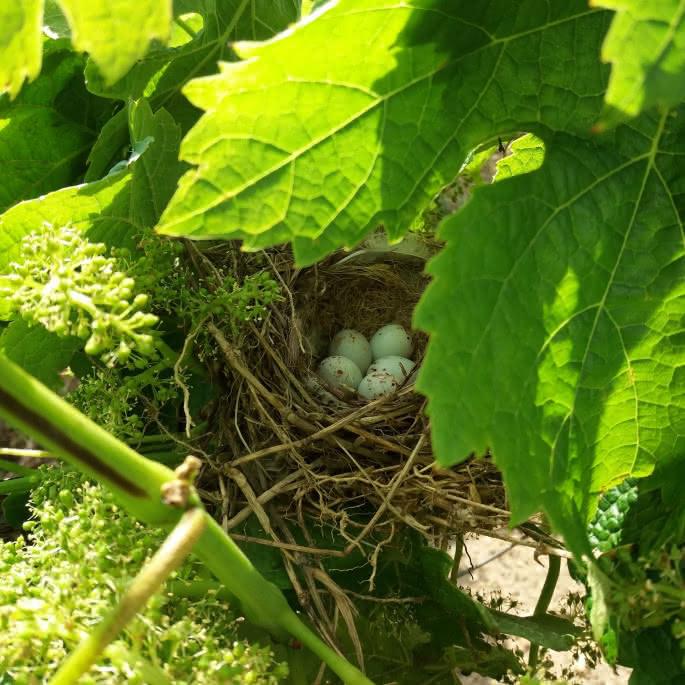 photo 5 nid